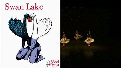 Cygnes sud-africains / Swan Lake